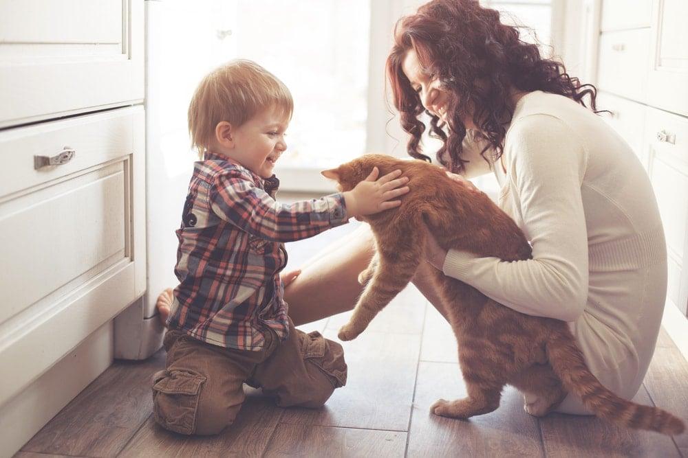 child custody - Bodekers